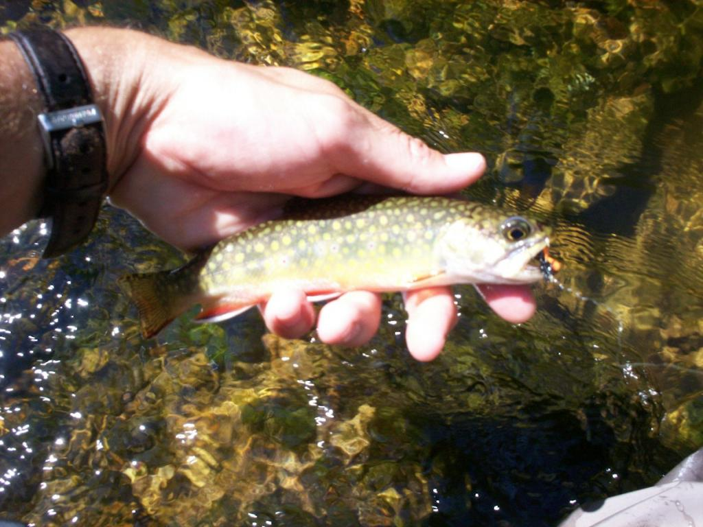 2009 TROUT SEASON 076.jpg