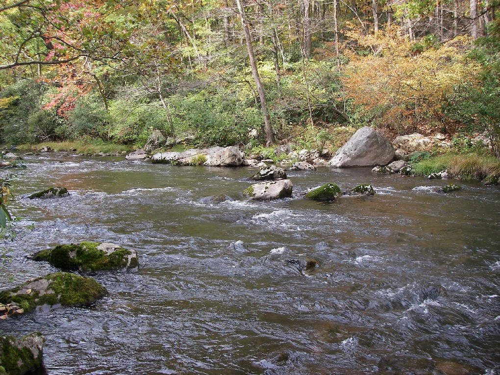 Dry Fly Water