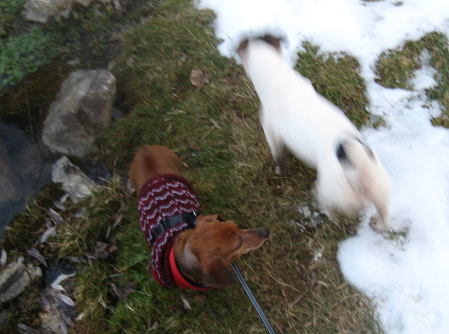 Doggie Day on Letort!