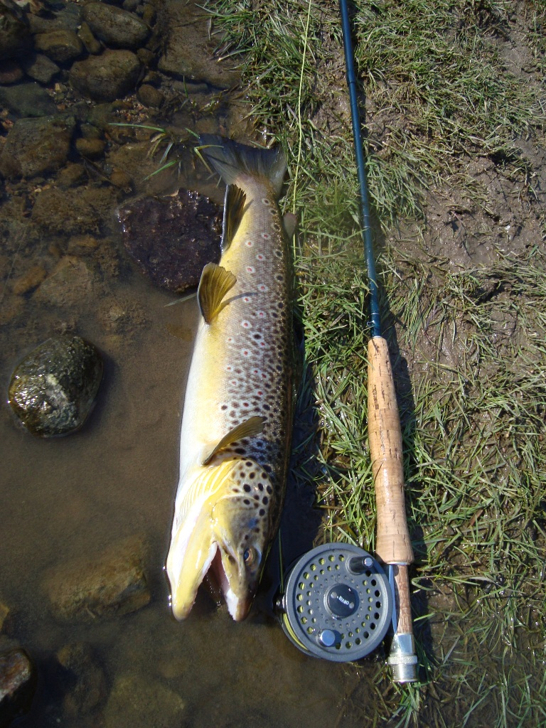 Pa Brown Trout