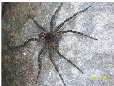hickory run spider