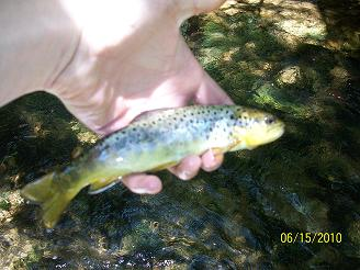hickory run brownie