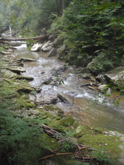 Nice Southern PA Stream