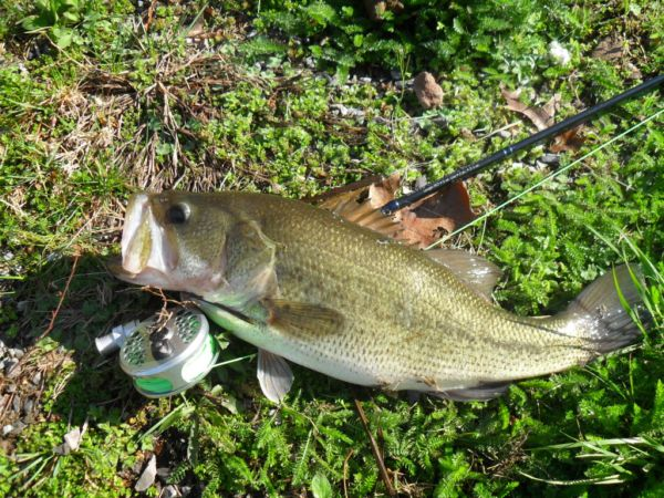 Spring Fed Lanc. Largemouth