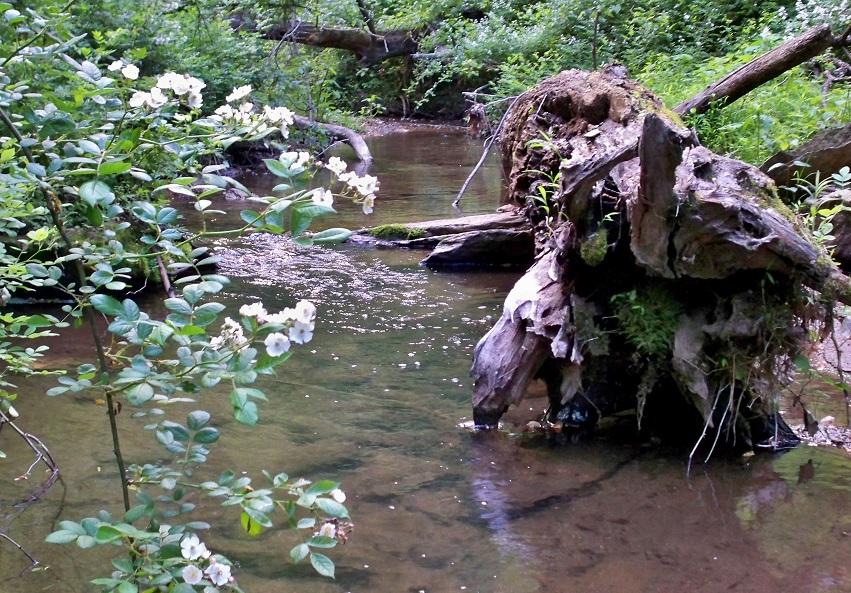 tiny brookie stream
