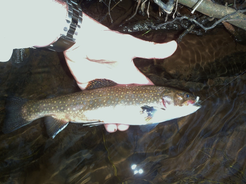First Trout of 2012