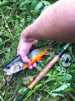 Nicest brook trout I've ever caught