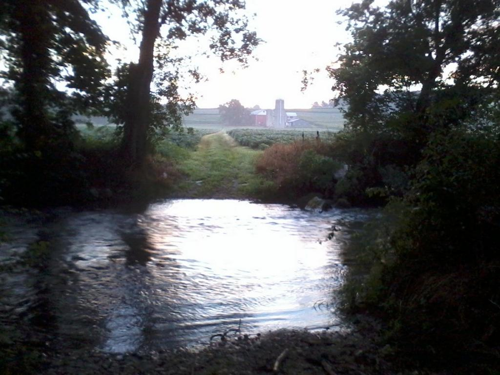 gorgeous morning on the stream