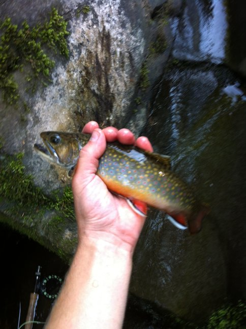 One More Nice NC PA Brookie