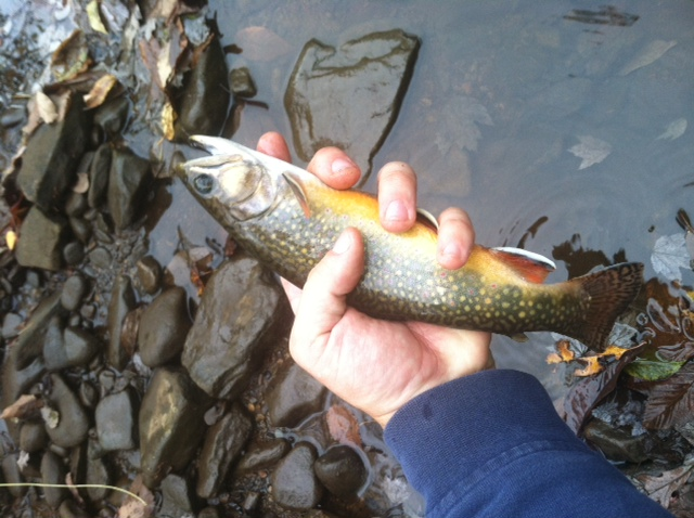 Clearfield County Brookie