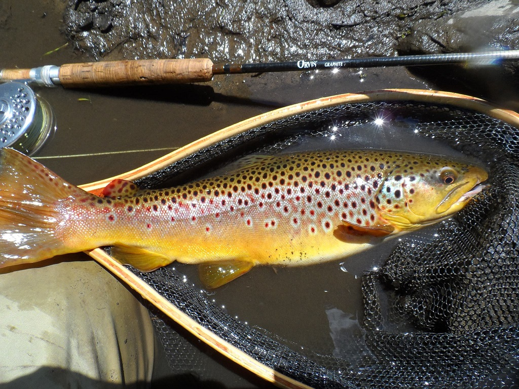 Stunning Wild Brown