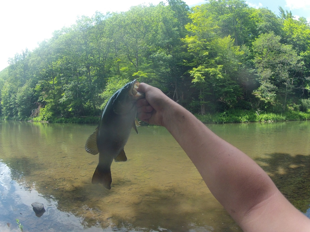 pine creek smallie