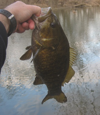 Early Smallie