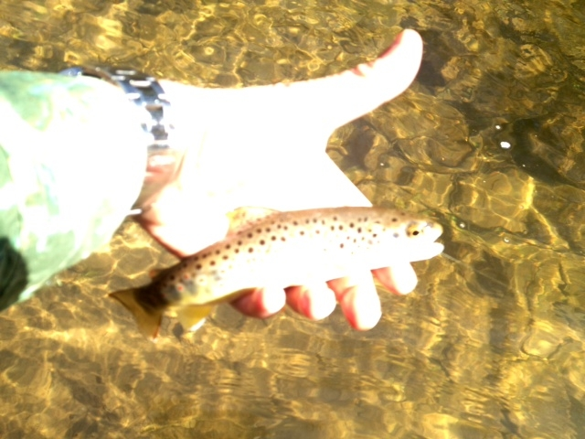 Clarks Creek Brown