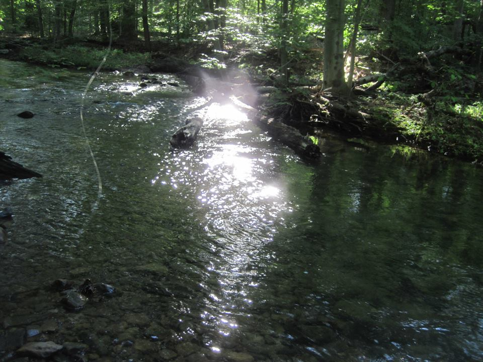 Perry County Brook Trout Stream