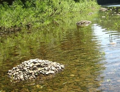 Fallfish Spawning Piles