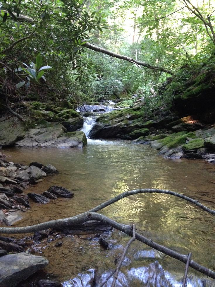 SE PA Brookie Hunting 2