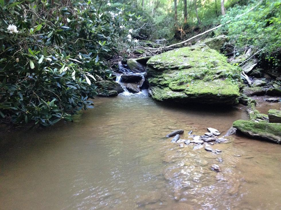 SE PA Brookie Hunting 3