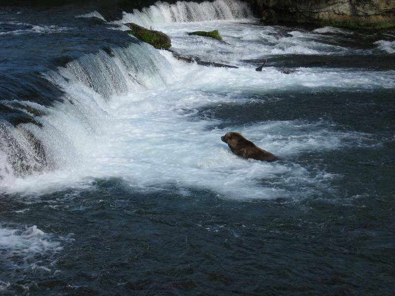 Brooks Falls AK