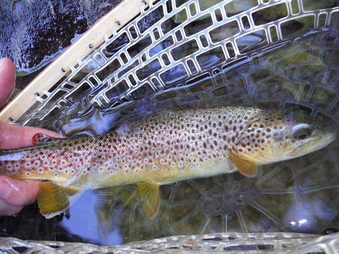 Big Fishing Creek Gem