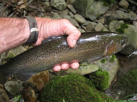A wild stream squatter!