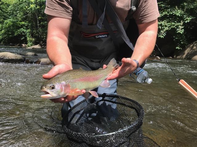 Savage River Wild Rainbow