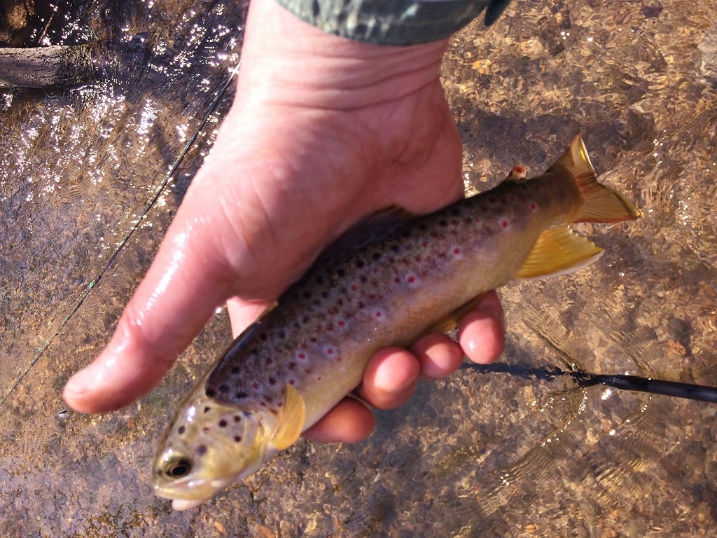 March Valley Creek Brown