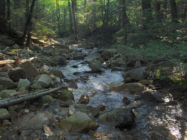 schuylkill  county brookie stream2