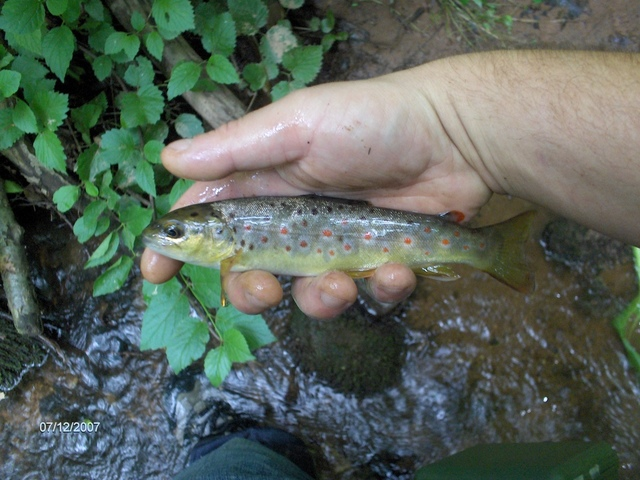 lancaster county wild brown