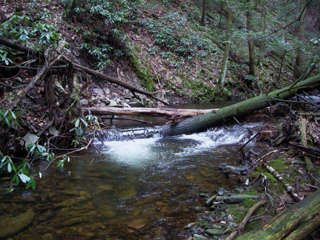 Centre County Brookie Stream