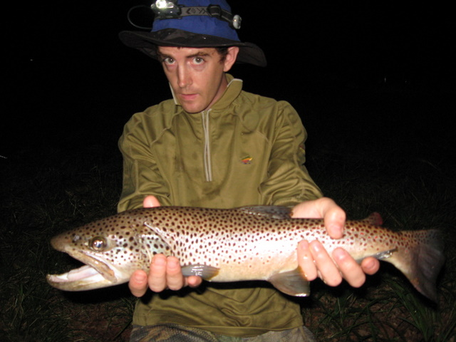 Another brownie from the North