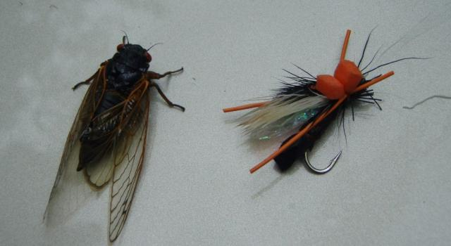 Cicada 08