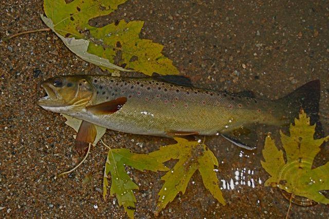 Valley Creek Brown
