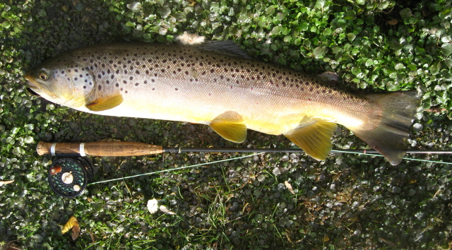 Big Spring Brown