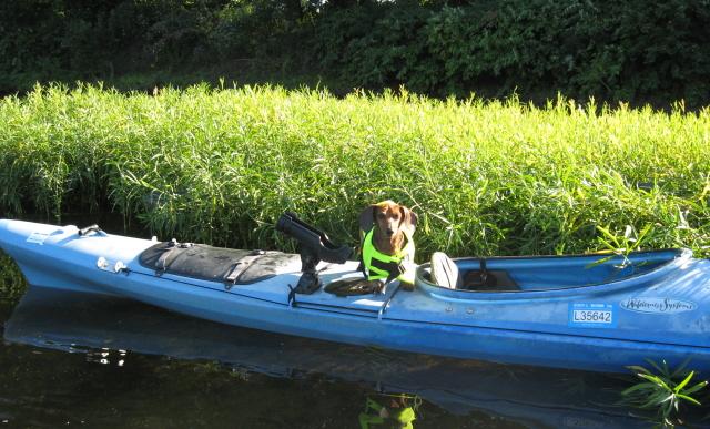Weiner in a boat!