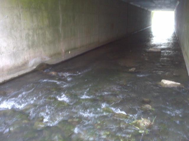 Limestone trout cave