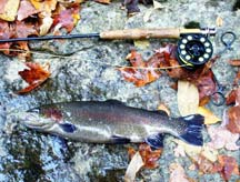 Fall Trout Stocking 2009...coming soon!
