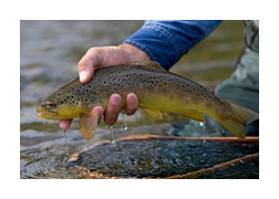 PFBC Strategic Plan for Trout Management