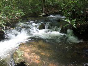 Brookie Stream