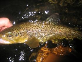 "14"" Spring Creek brownie - spinner fall during jam"