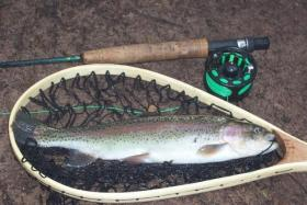 Clark Creek Trout