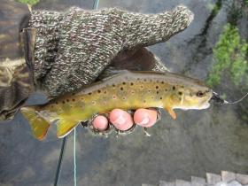 First Trout of 2010