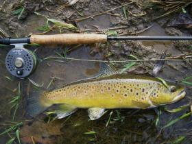 Intresting Brown Trout