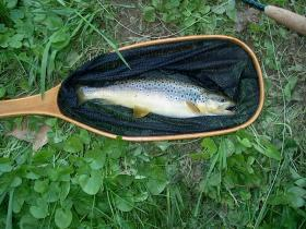 Valley creek trout