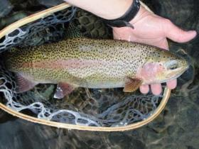 East branch rainbow