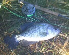 Monster Crappie!