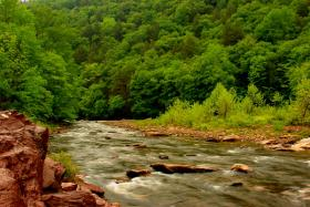Loyalsock Creek Early June