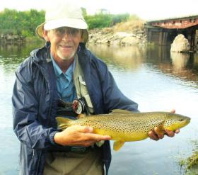 Largest dry fly Brown