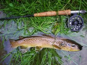 Streamer Brown
