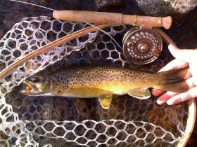 local stream brown